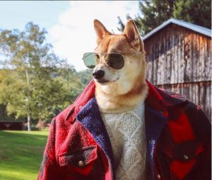 gallouslad - menswear dog1