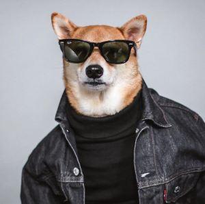 gallouslad - menswear dog2