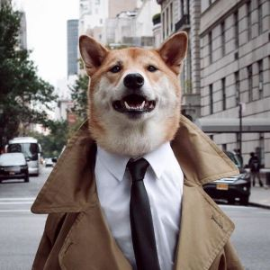gallouslad - menswear dog3
