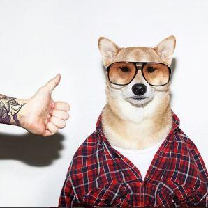gallouslad - menswear dog4