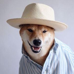 gallouslad - menswear dog5