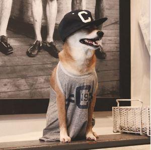 gallouslad - menswear dog6