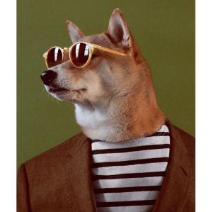 gallouslad - menswear dog7