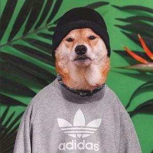 gallouslad - menswear dog8