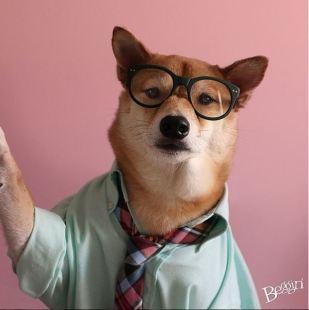 gallouslad - menswear dog9